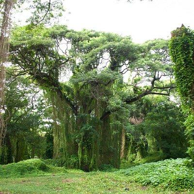Парк в Гаване Метрополитано