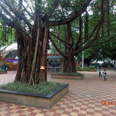 Баньяны в парке Дунфэнг