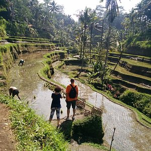 Farming situation in Bali, manual work, way of life, awesome day with ubud Baliday Tour, local g