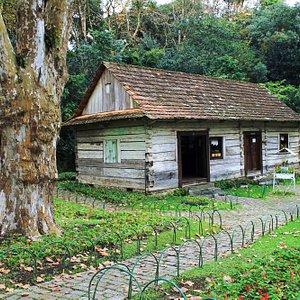 Bosque João Paulo II, Curitiba, Paraná, Brasil