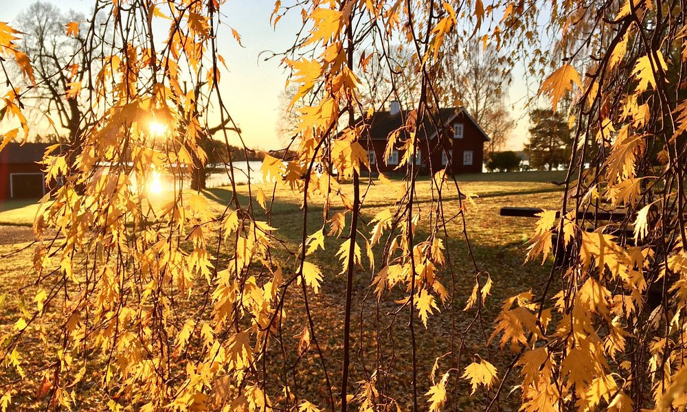 The beautiful site of the medieval guesthouse Ornässtugan in Dalarna