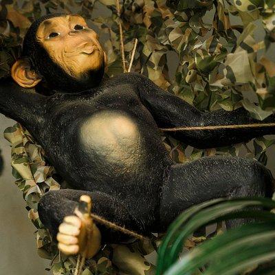 Rozbitkowie w Dżungli