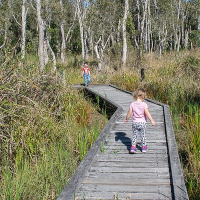The boardwalk over the wetlands area