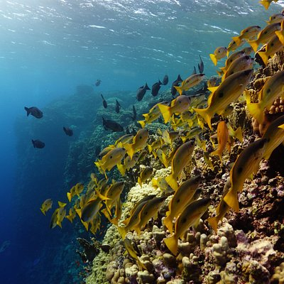 Fishlife close to the surface Elphinstone Reef October 18 2017.
