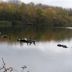 """View across two of the pools, plus unidentifiable bird """"taking-off"""" in front of heron......any c"""