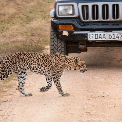 Yala Safari with Sena