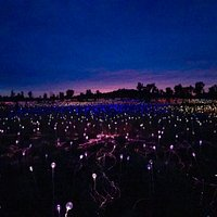 Dawn Field of lights