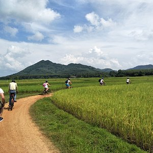 Cycling through the rice fields of Koh Yao Noi