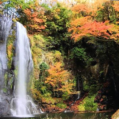 森林 公園 小国 長岡市おぐに森林公園