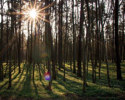 Botanical reserve of Vidzgiris at spring time