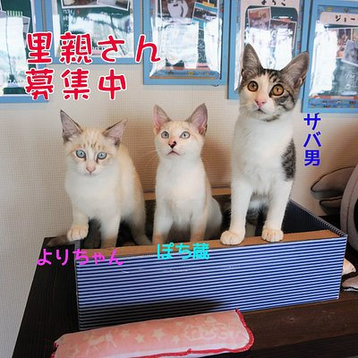 They're a homeless cat.I protected at our store.I protected at our store.