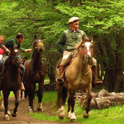 Recorriendo bosques nativos de la patagonia