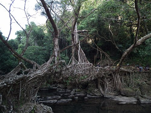 Single root bridge...amazing natural art