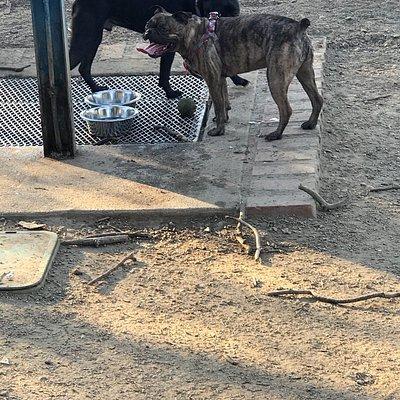 Griffith Park Dog Park