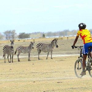 Cycling through Lake Manyara with Ahsante Tours