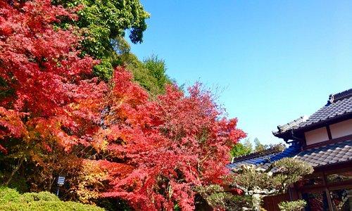 蓮光寺 秋の紅葉が見事です🍁🍁。