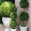 jardinescanning