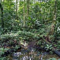 La fortuna arenal volcano rain forestal reserve