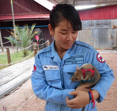 APOPO Staff Member with a HeroRAT