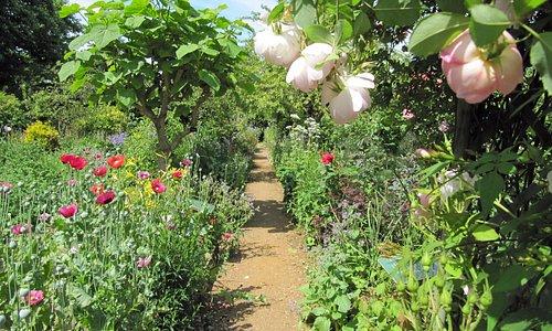 The gardens in summer