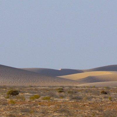 Roaming around te dunes