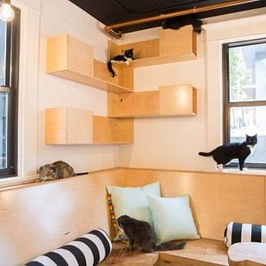 The kitty room