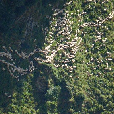 pecore al colle Mud