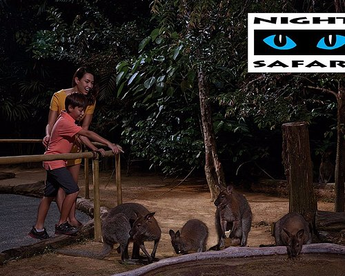 Look forward to some of Australia's most fascinating nocturnal wildlife natives.