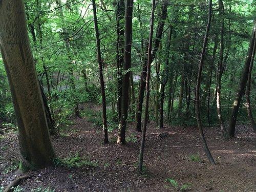 The lovely woods