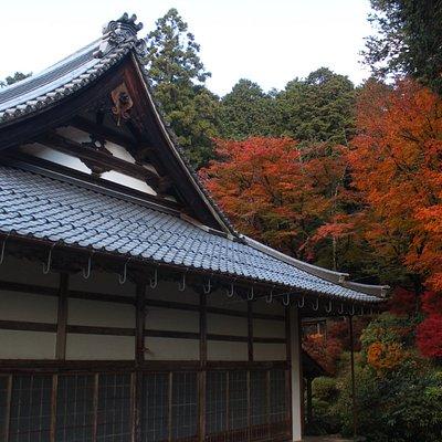 お庭の裏の紅葉