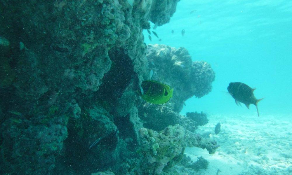 Snorkeling Trip with Catamaran