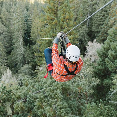 Zip above and through the redwood forest canopy on this world class tour.