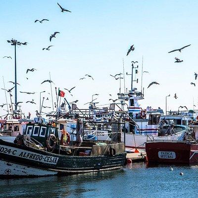 Doca dos pescadores, na hora de descarregar o peixe.