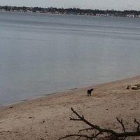 pieski lubią plażę