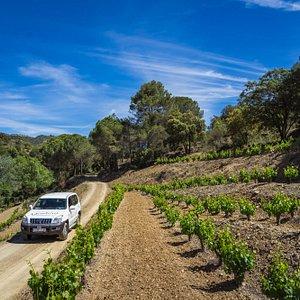 Ruta 4x4 entre viñedos