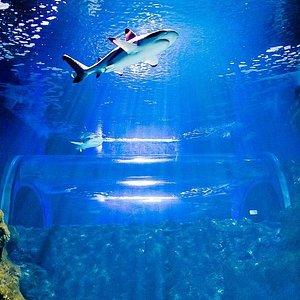 Túnel submarino de tiburones. Submarine tunnel with sharks.
