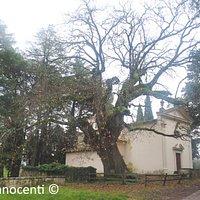 Chiesa di Santa Margherita a Caserotta e Quercia Monumentale 1