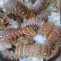 Fresh local lobster