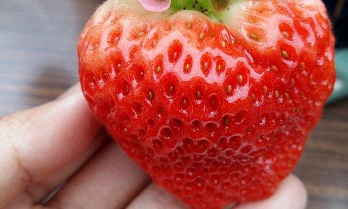 Strawberry 111