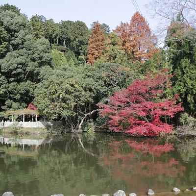 最上山公園もみじ山:弁天池