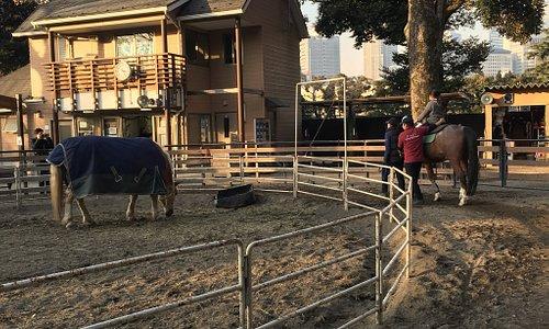 horse riding park in Yoyogi park
