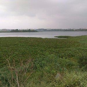 Doddanekundi Lake