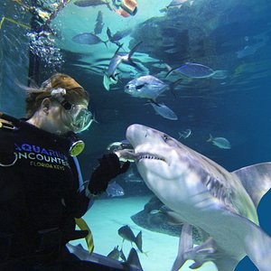 Our unique tanks allow guests an up close view and safe hand feeding of our sharks