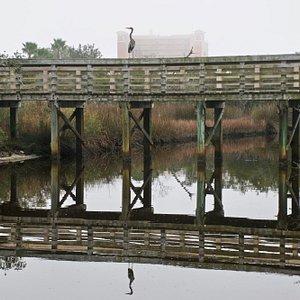 Walkway at Wade Ward Nature Park