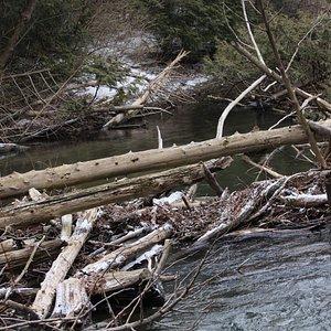 Thurne Parks C.A.: Wide shot of Wilmot Creek