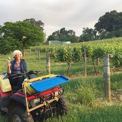 A relaxing afternoon in the vineyard.