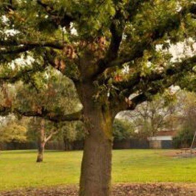 Breavington Park
