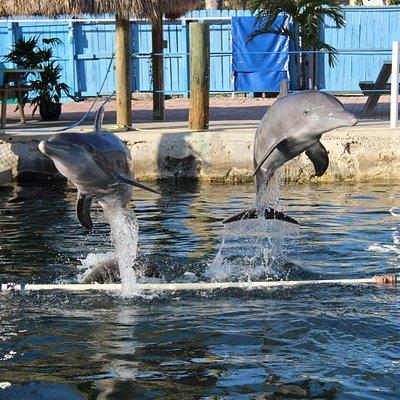 Dolphins Plus Marine Mammal Responder
