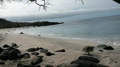 Playa Baquerizo