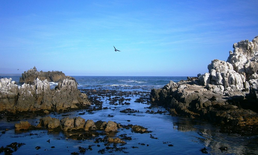 Coastal Tidal Pools